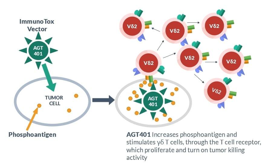 immunotox-vector