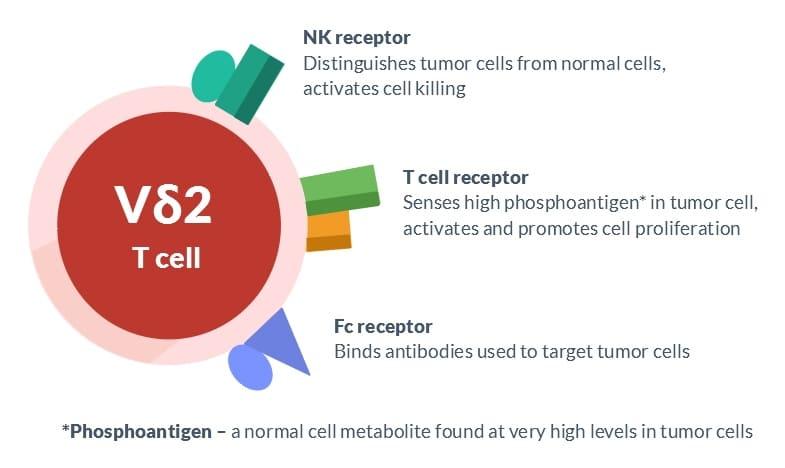 nk-receptor